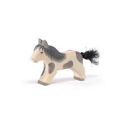 Shetland Pony laufend
